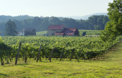 French Creek Ridge Vineyards