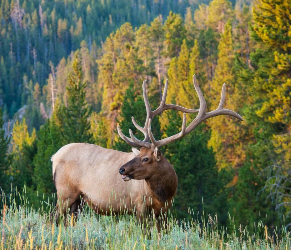 Ghosts of The Forest: The Hard Reality of Elk Hunting