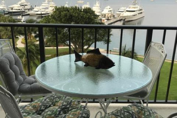 Home for Sale at 134 Lakeshore Drive #714, North Palm Beach FL 33408