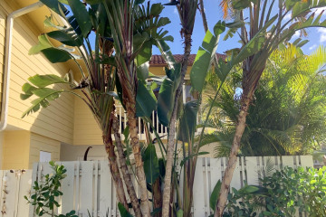 Home for Rent at 149 Seabreeze Circle, Jupiter FL 33477