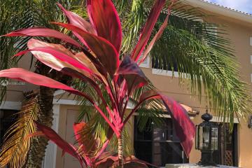 Home for Rent at 386 Prestwick Cir #1, Palm Beach Gardens FL 33418