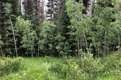 Springboard Trail