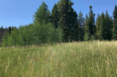 01 Colt Trail