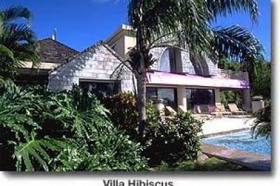 3b-59 Sans Soucci & Guinea Gut #Hibiscus 1