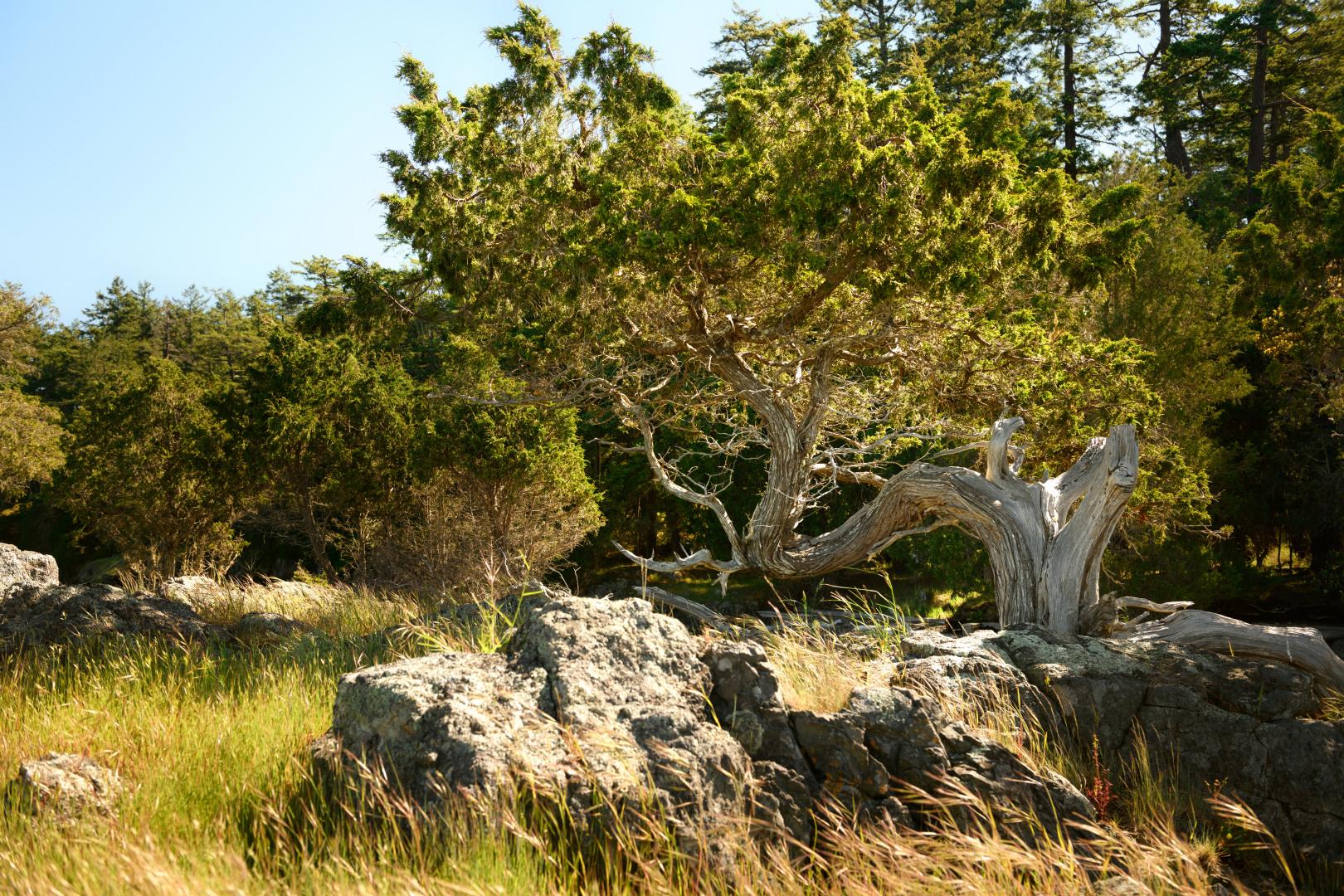 0 xxx Reef Island Photo 21