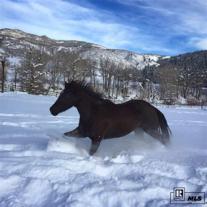Enjoying watching your horses and animals romp and enjoy the snow.