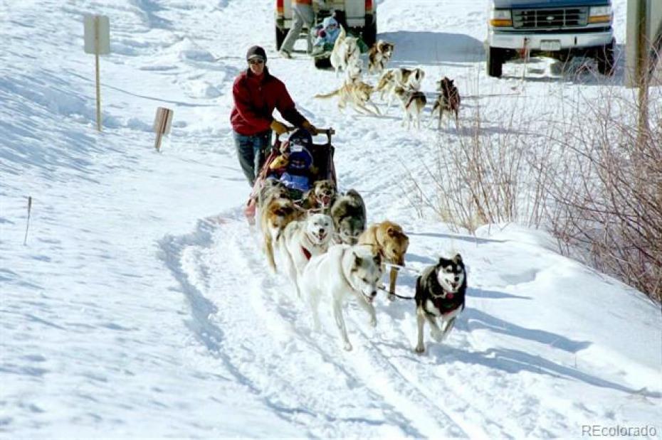 Dog Sledding (photo from www.stage-coach.com)