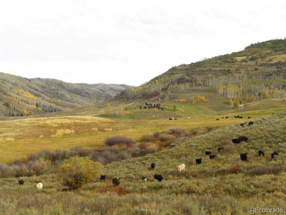 Big Creek valley opens up to beautiful large meadows flanked by treed hillsides.