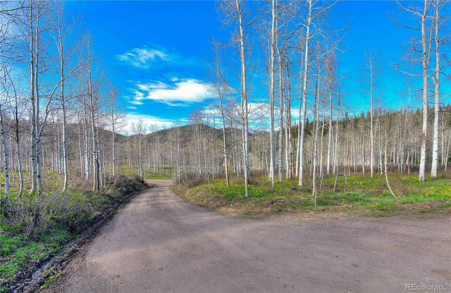 Private drive to house with continued aspen grove.