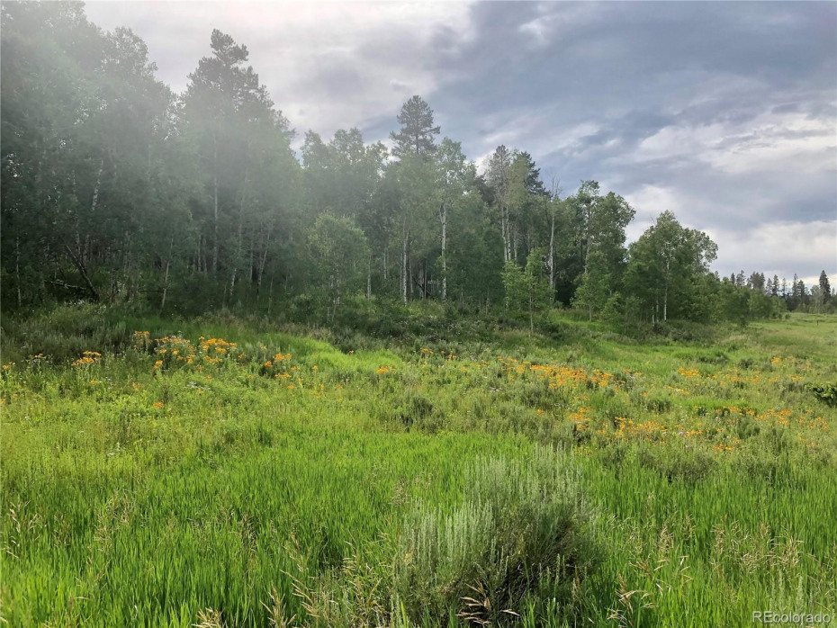 Photo of actual land on Lot 182 Ute Trail