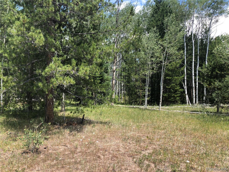 Photo of actual land on Lot 15 showing mixed trees