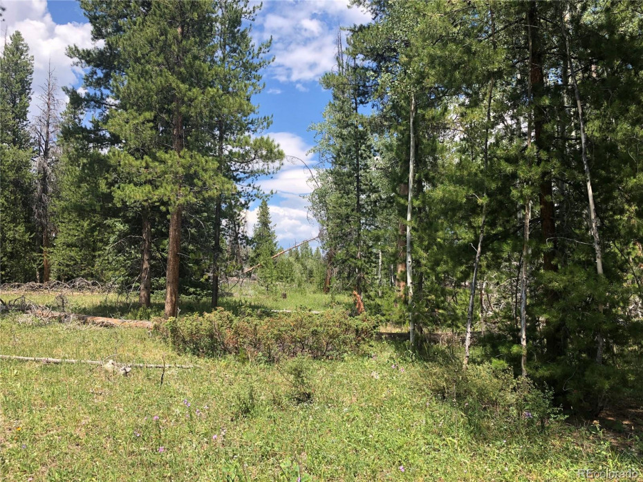 Photo of actual land on Lot 15