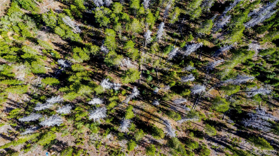 Pine forest on property