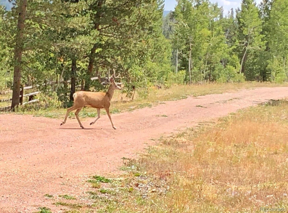 05 Cody Trail Photo