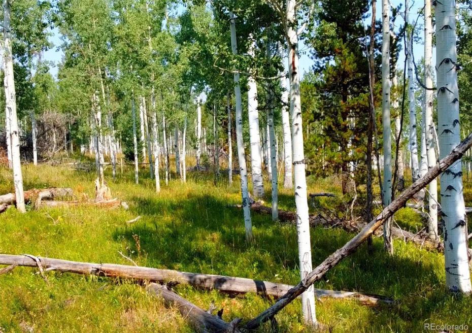 Halter Trail Photo