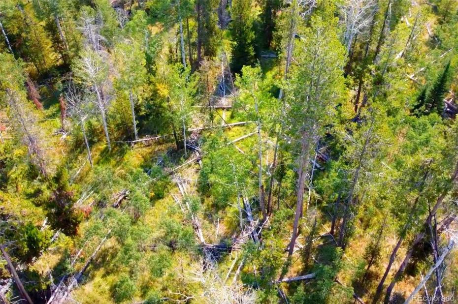 Carson Trail Photo