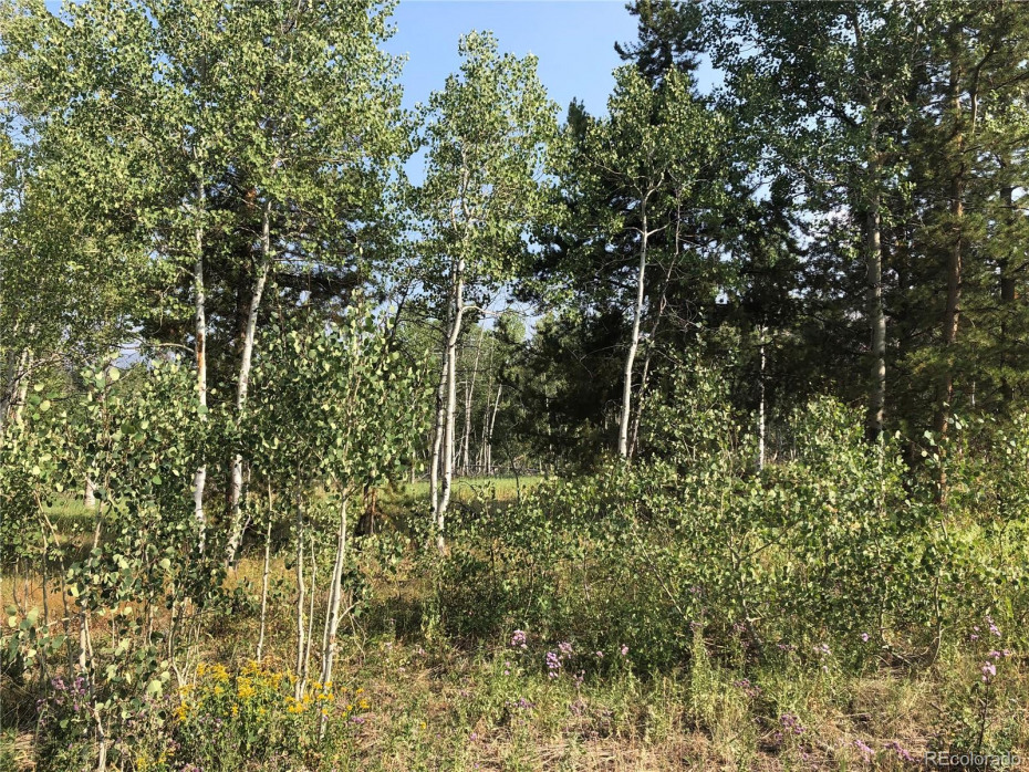 View of surrounding area with plenty of aspen trees and mixed vegetation.