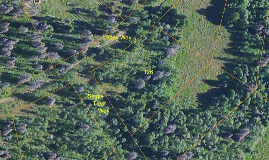 Single Tree Way Photo