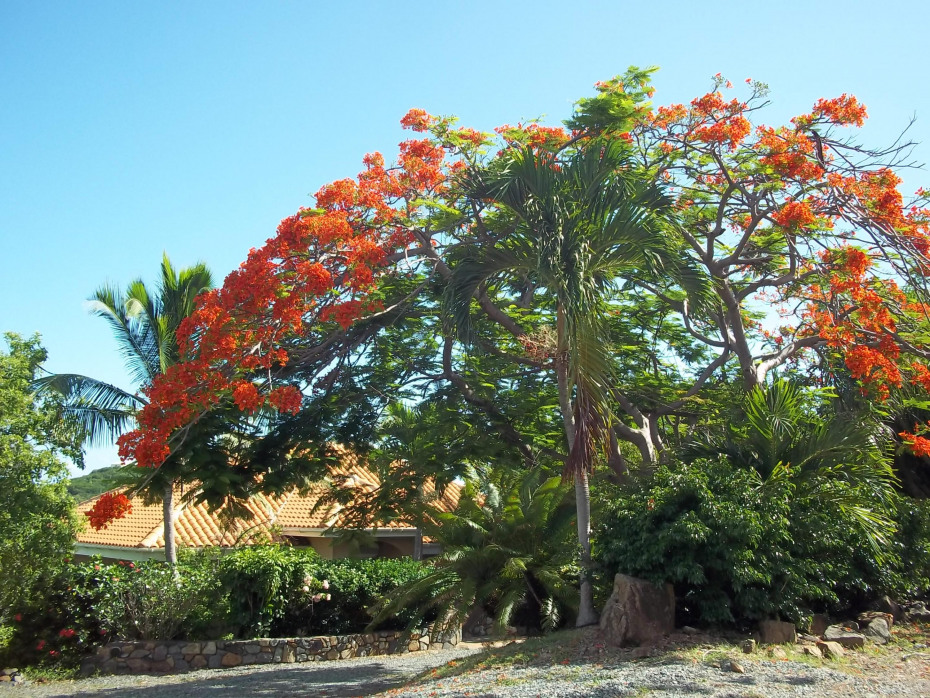 Front Exterior with Flamboyant Tree