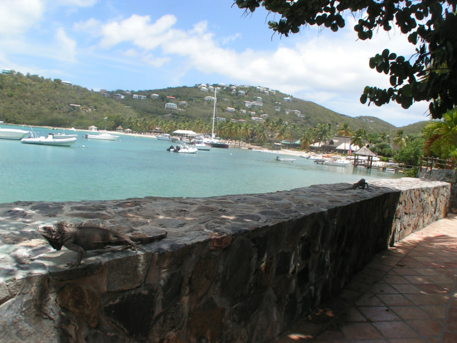 Native Stone Wall & Iguanas