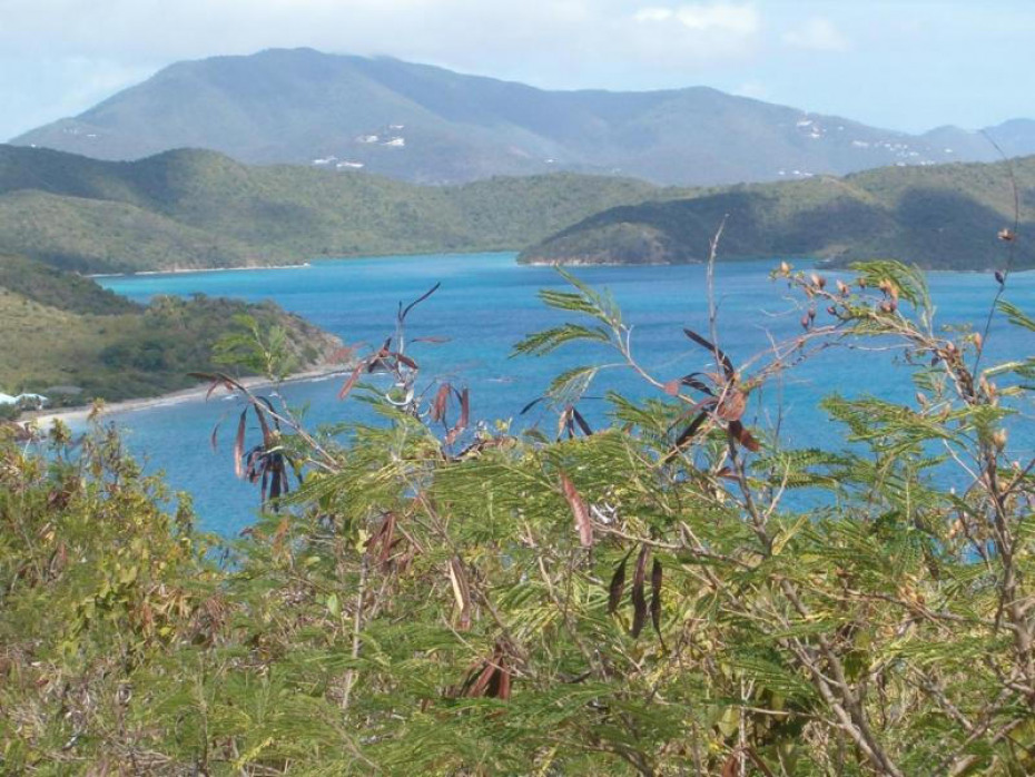 View towards Coral Bay & Hurricane Hole
