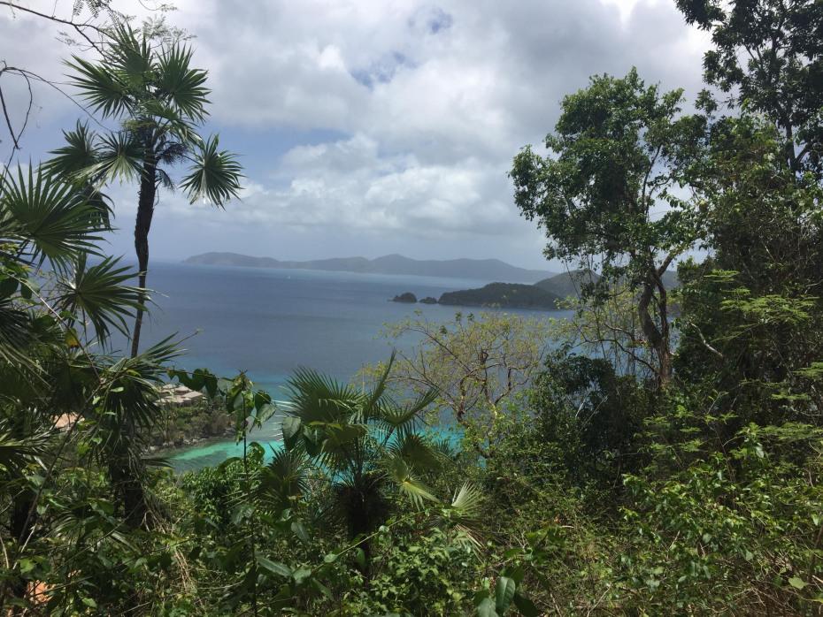 Views to BVI's