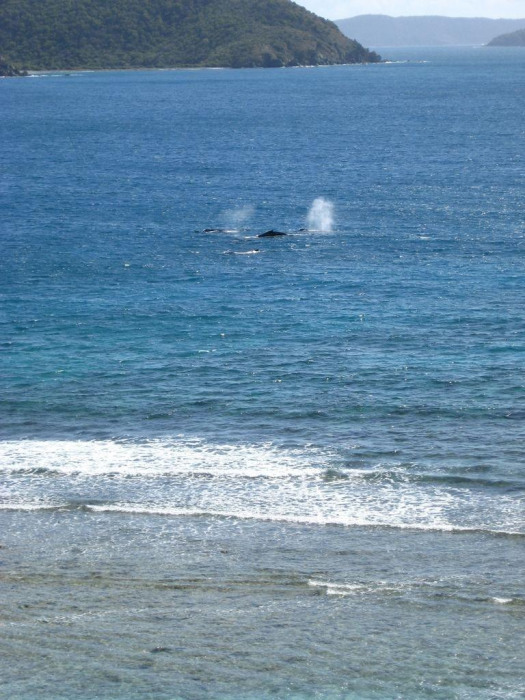 Watching the Whales