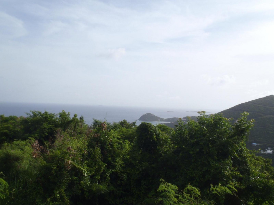 Koons View Photo