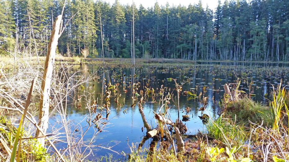 147 Dry Lake Rd Photo 5